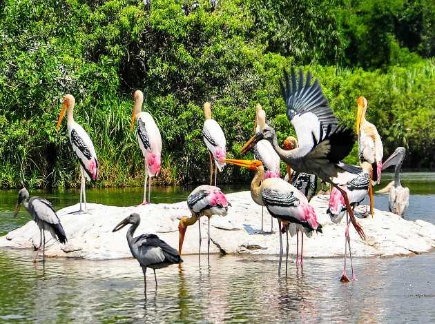 Kumarakom-Bird-Sanctuary