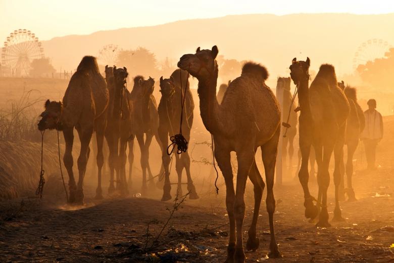 Pushkar-Camel-Festival