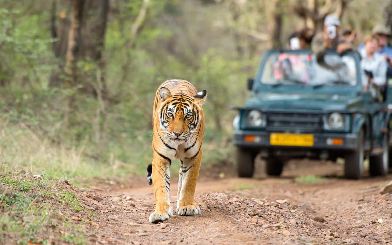 Ranthambore National Park Game Drive