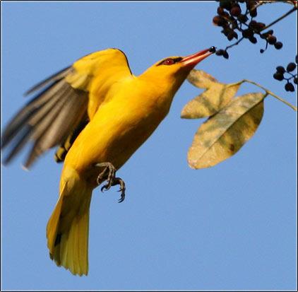 Goa Birding Tour