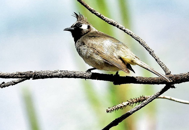 Birding in Pragpur