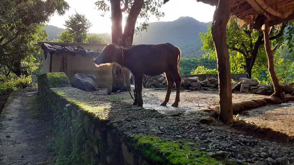 Maral Village Rishikesh Uttrakhand 1
