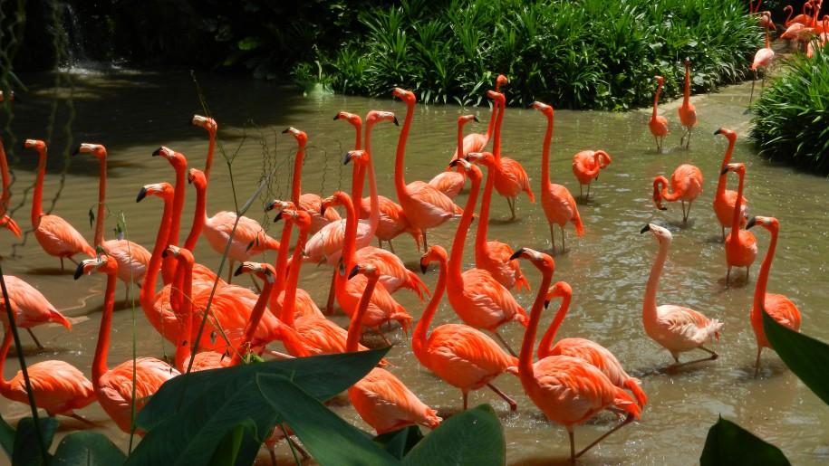 Jurong Bird Park Flamingo