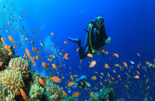 Scuba Diving Coral Island Pattaya
