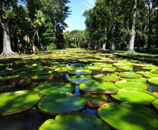 Pamplemousses Botanical Garden mauritius